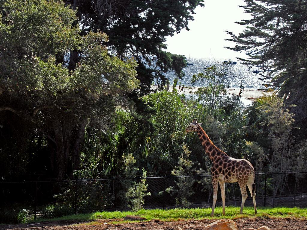 Santa Barbara Hotels >> Santa Barbara Zoo | Santa Barbara Restaurants, Hotels, Activities & Events