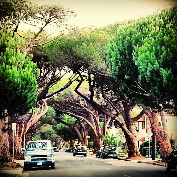anapamu-street-santa-barbara