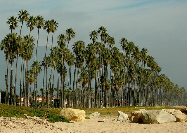 chase-palm-park-santa-barbara