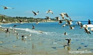 refugio-state-beach-santa-barbara