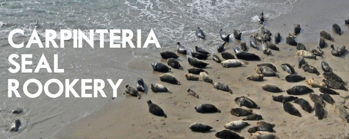 Carpinteria Seals 1