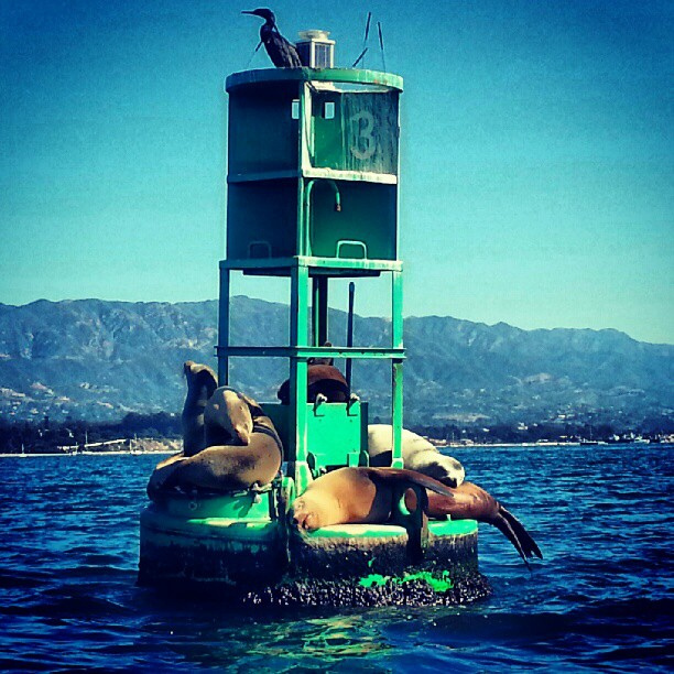 pinniped-buoy-santa-barbara