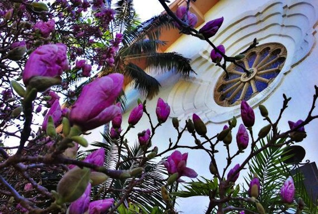 santa-barbara-courthouse-blossoms