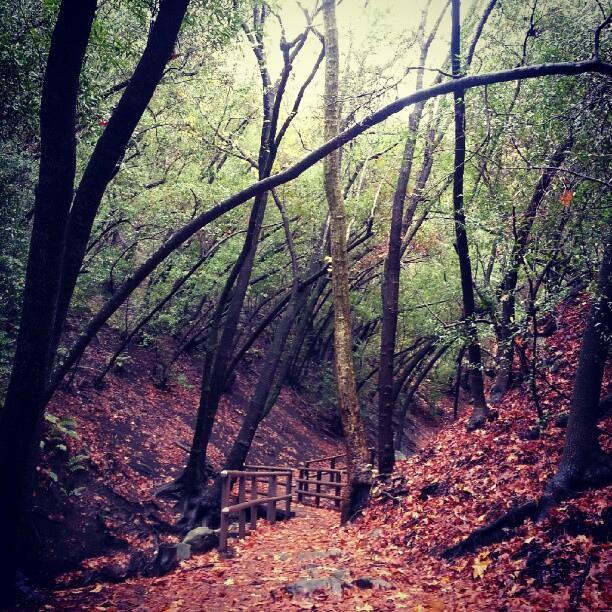 santa-barbara-nojoqui-falls-trail