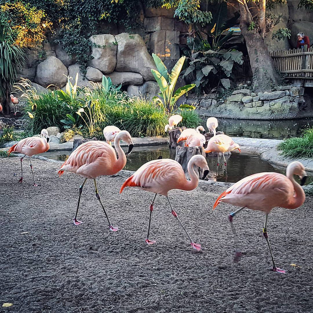 Santa-barbara-zoo-10